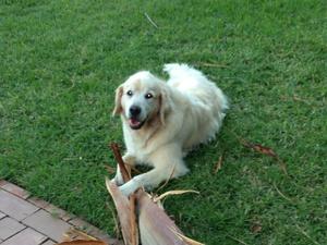 Housesitting assignment in Dolans Bay NSW 2229, Australia