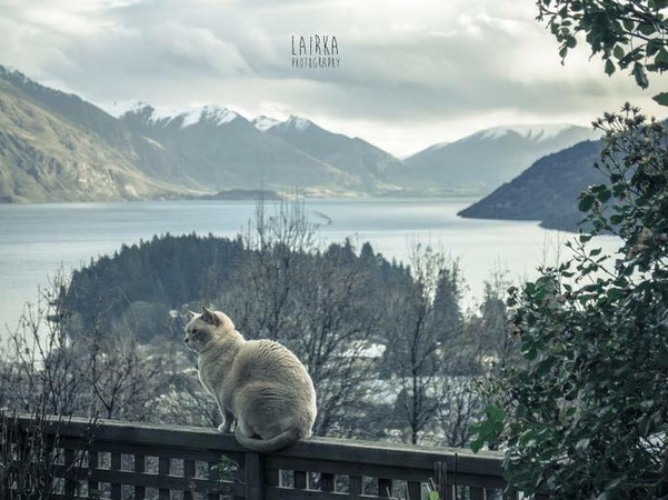Housesitting assignment in Queenstown, New Zealand