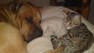 House & Pet Sitters from London, UK - Image 2