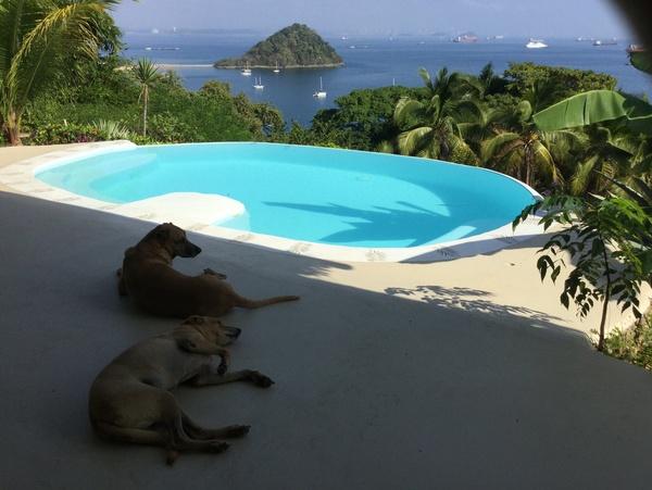 Housesitting assignment in Panamacito, Panama
