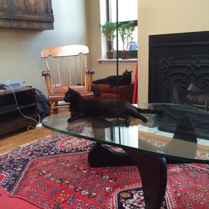 House sitting job - New York City, NY, United States