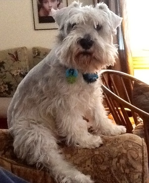Housesitting assignment in Galway-Cavendish and Harvey, ON, Canada