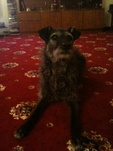 Housesitting assignment in Turriff, Aberdeenshire AB53, UK