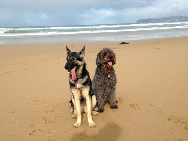 Housesitting assignment in Aireys Inlet, VIC, Australia