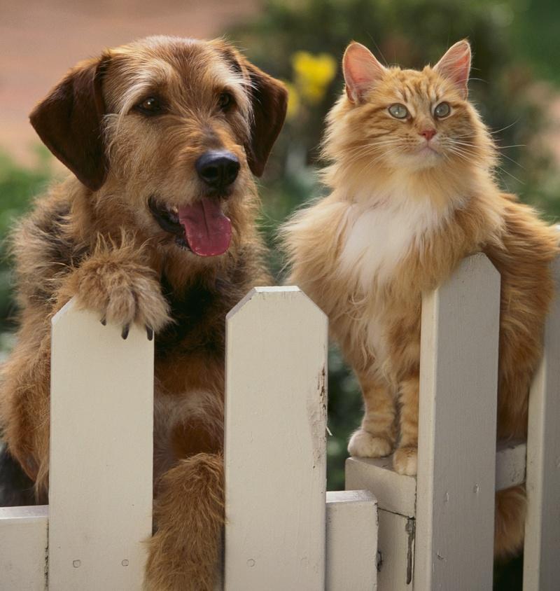 cat dog gate cut