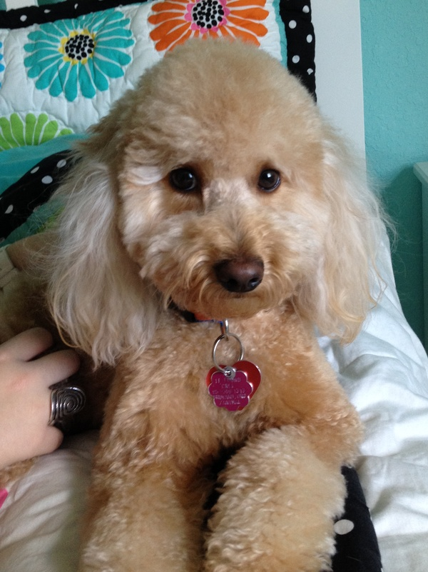 Housesitting assignment in Cooper City, FL, United States