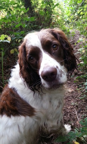 House & Pet Sitters from Herefordshire, UK