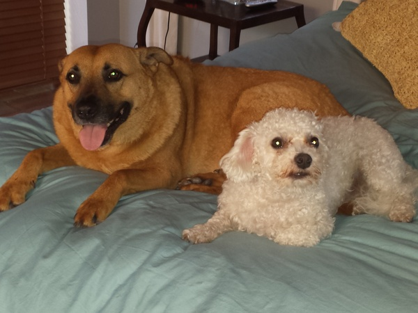 Housesitting assignment in Allapattah, FL, United States