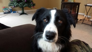 Housesitting assignment in Rice, MN 56367, USA
