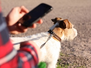 APPS FOR DOG OWNERS