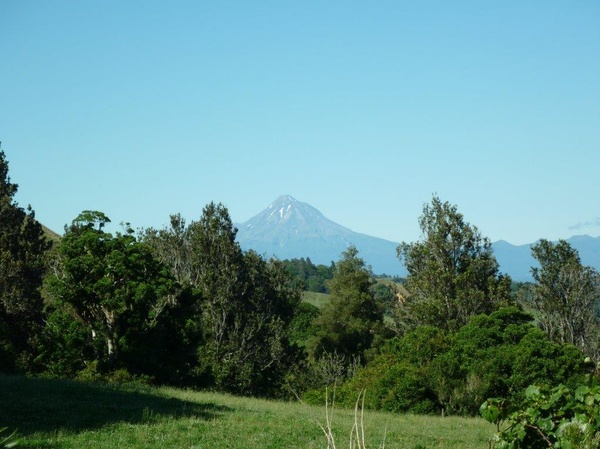 Housesitting assignment in Urenui, New Zealand