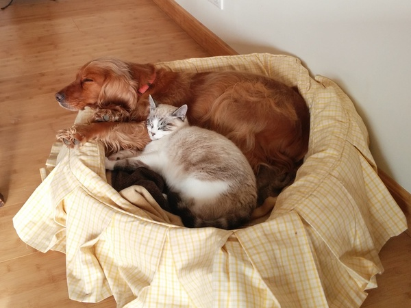 Housesitting assignment in Montcuq, France