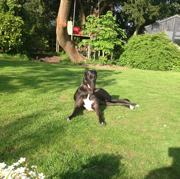 Housesitting assignment in Ashwell, Rutland LE15, UK