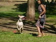 House & Pet Sitters from Singapore