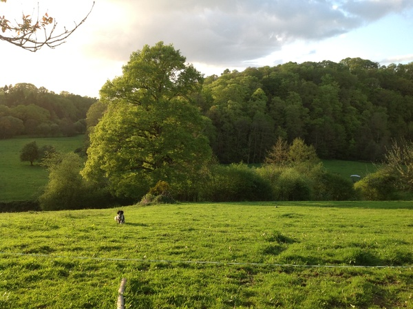 Housesitting assignment in Granville, France