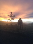 Housesitting assignment in Onewhero, New Zealand