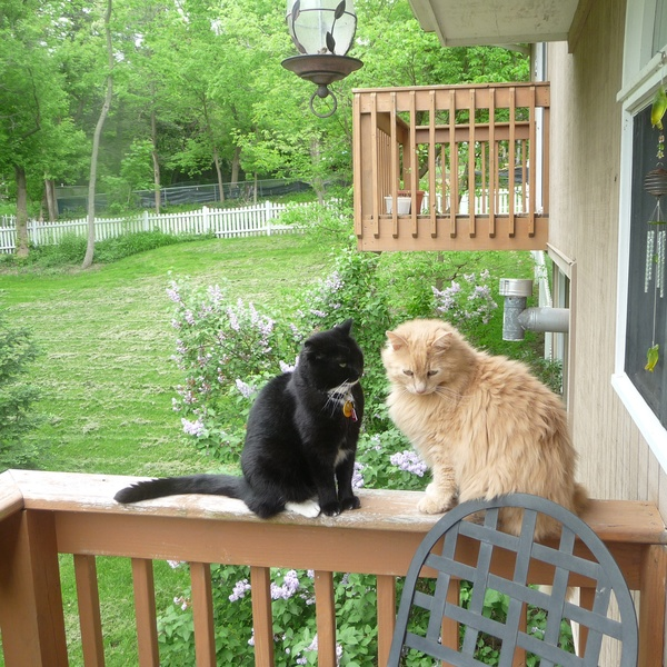 Housesitting assignment in Spring Grove, IL, USA