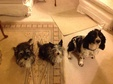 House & Pet Sitters from Lewes, East Sussex, UK