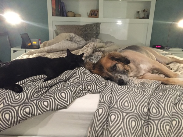 Housesitting assignment in Engadine, NSW, Australia