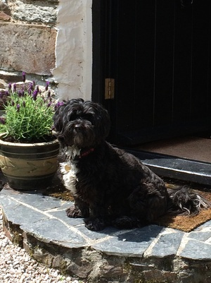Housesitting assignment in Launceston, Cornwall PL15, UK