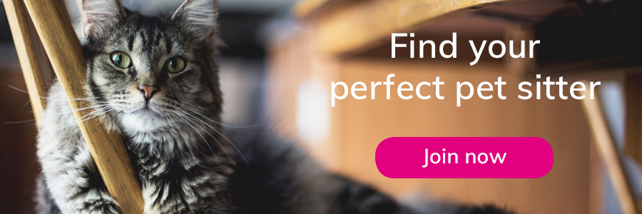 whether it s concerning your own cat or a pet in your care they ll happily help you with all your animal related questions or queries