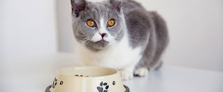 the answer is simply cat food just make sure you choose a can bag or pouch labelled complete as commercially complete cat food is specially formulated