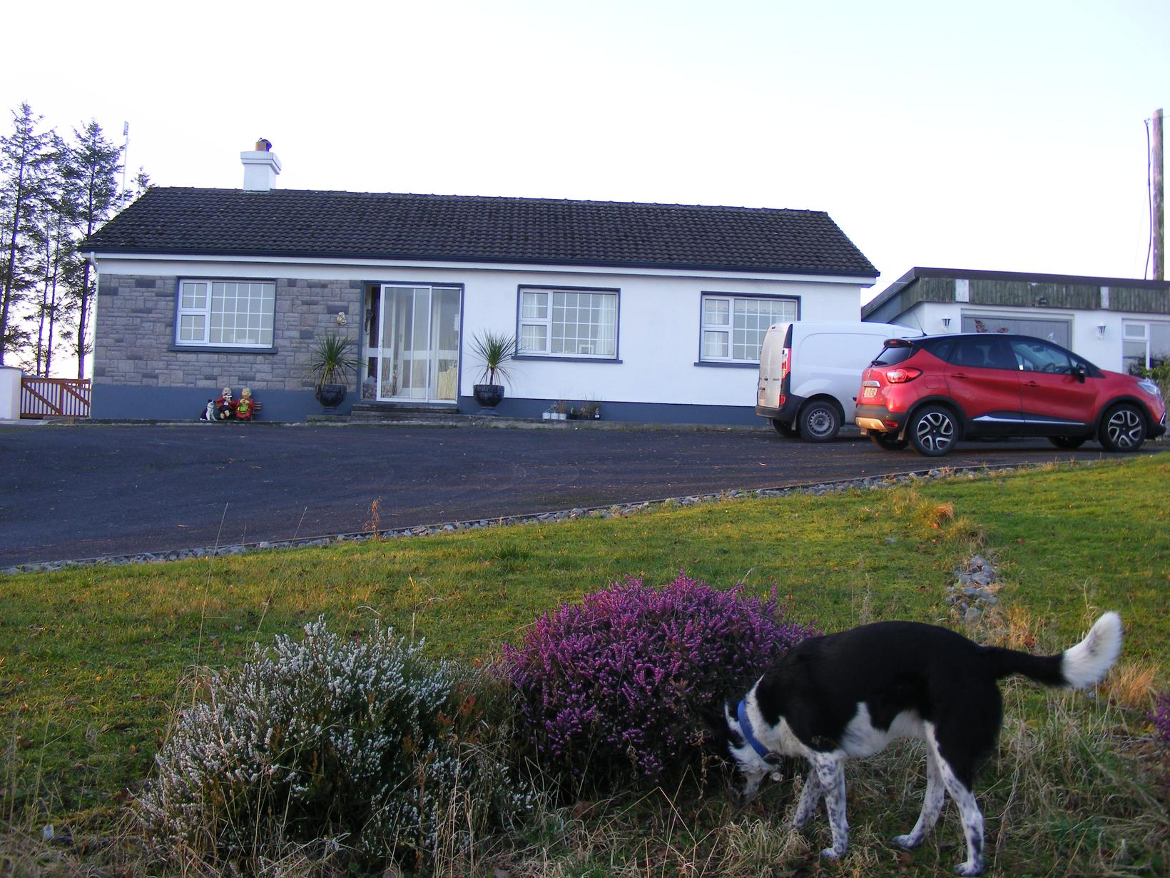 Housesitting assignment in Inagh, Ireland