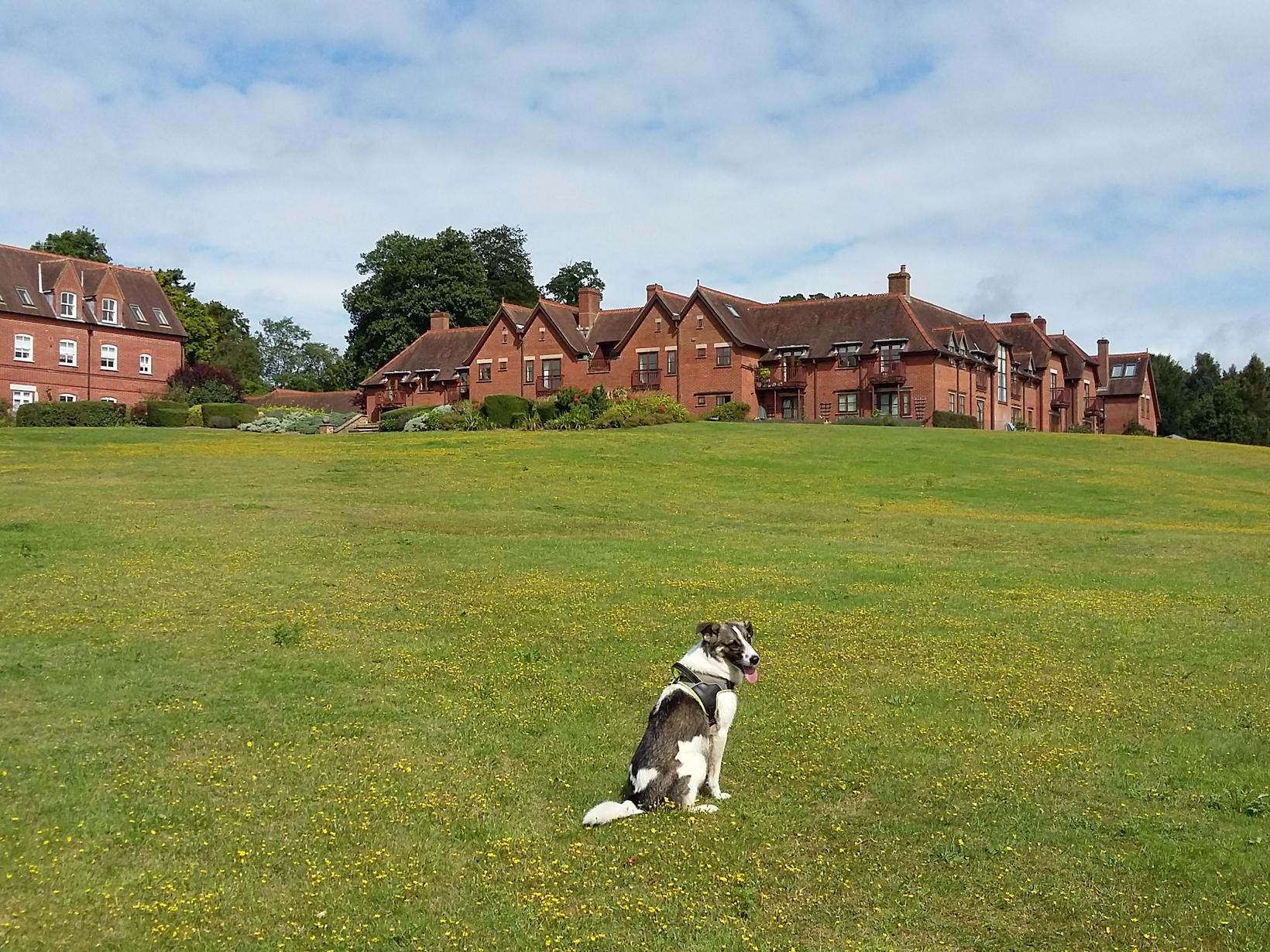Housesitting assignment in Godalming, United Kingdom