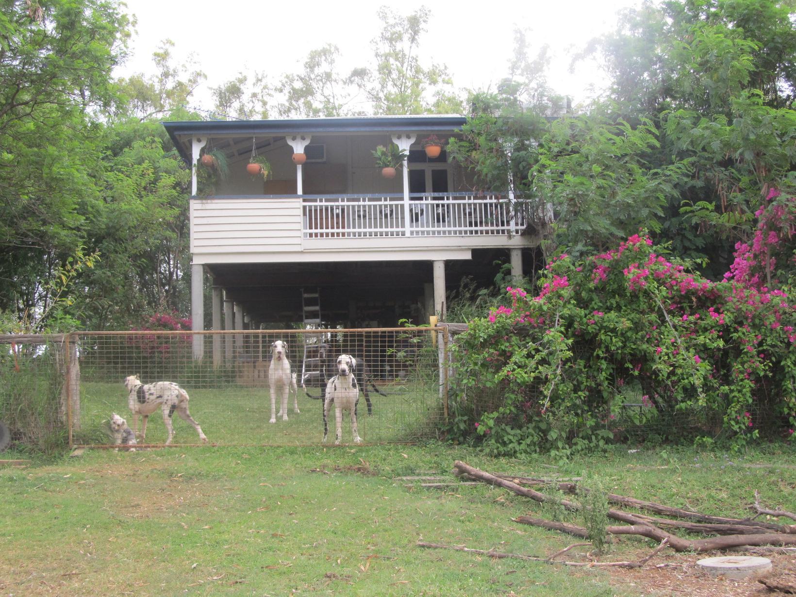 Housesitting assignment in Gatton, Queensland, Australia