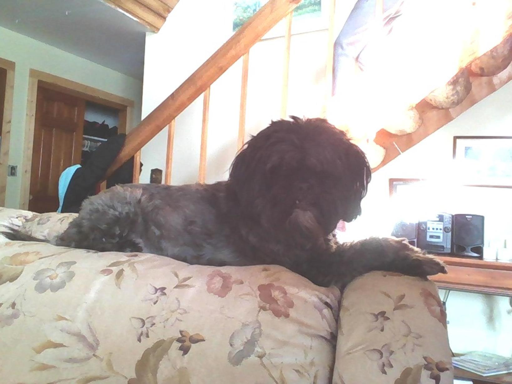 Housesitting assignment in Glidden, Wisconsin, United States