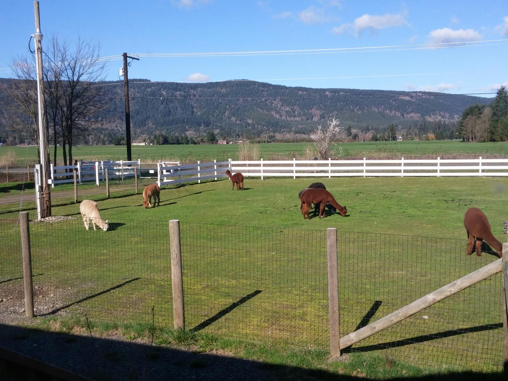 Housesitting assignment in Rochester, Washington, United States