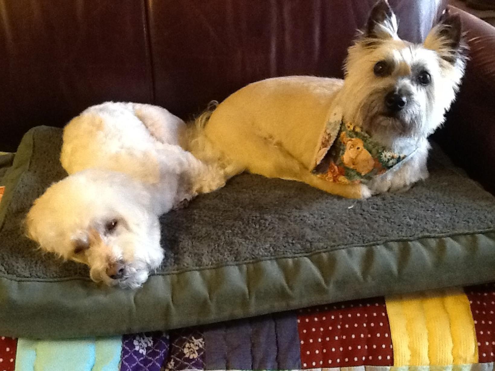 """Glenda & Charles """"eddie"""" from Alvord, Texas, United States"""