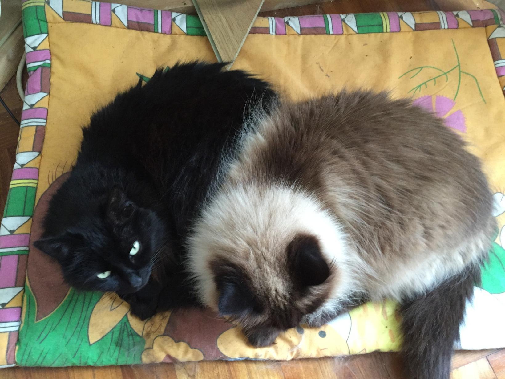 Geoff & Lyn from Pluméliau, France