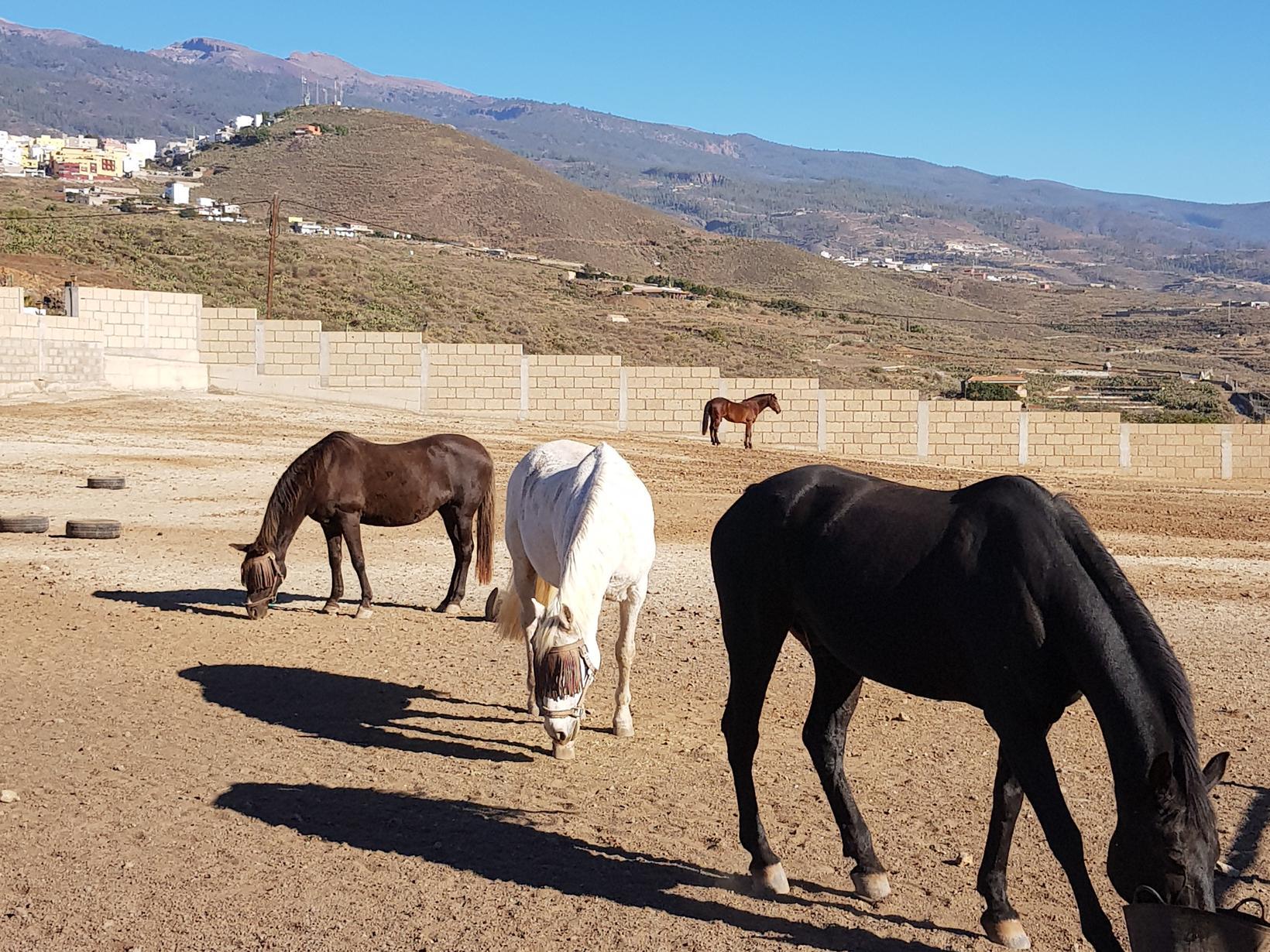 Housesitting assignment in Santa Cruz de Tenerife, Spain