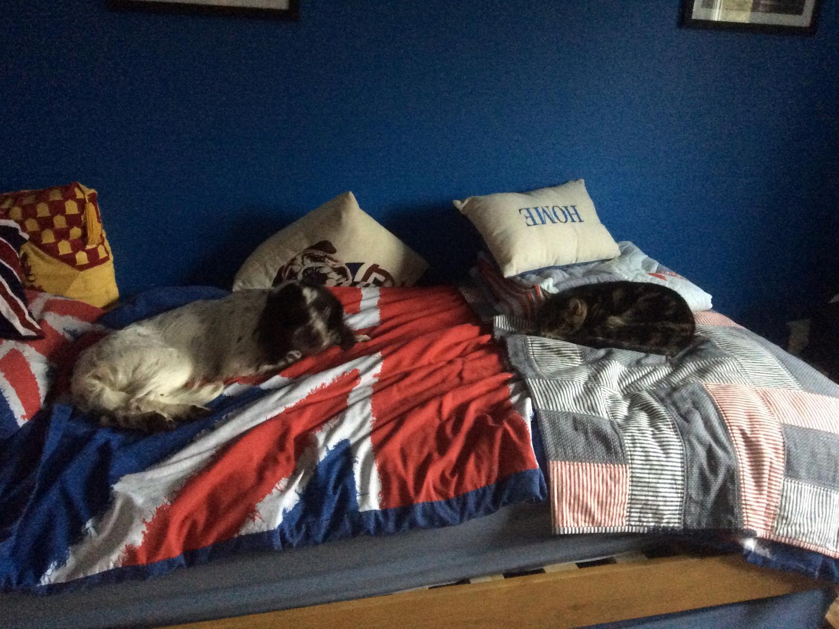 Housesitting assignment in Berkhamsted, United Kingdom