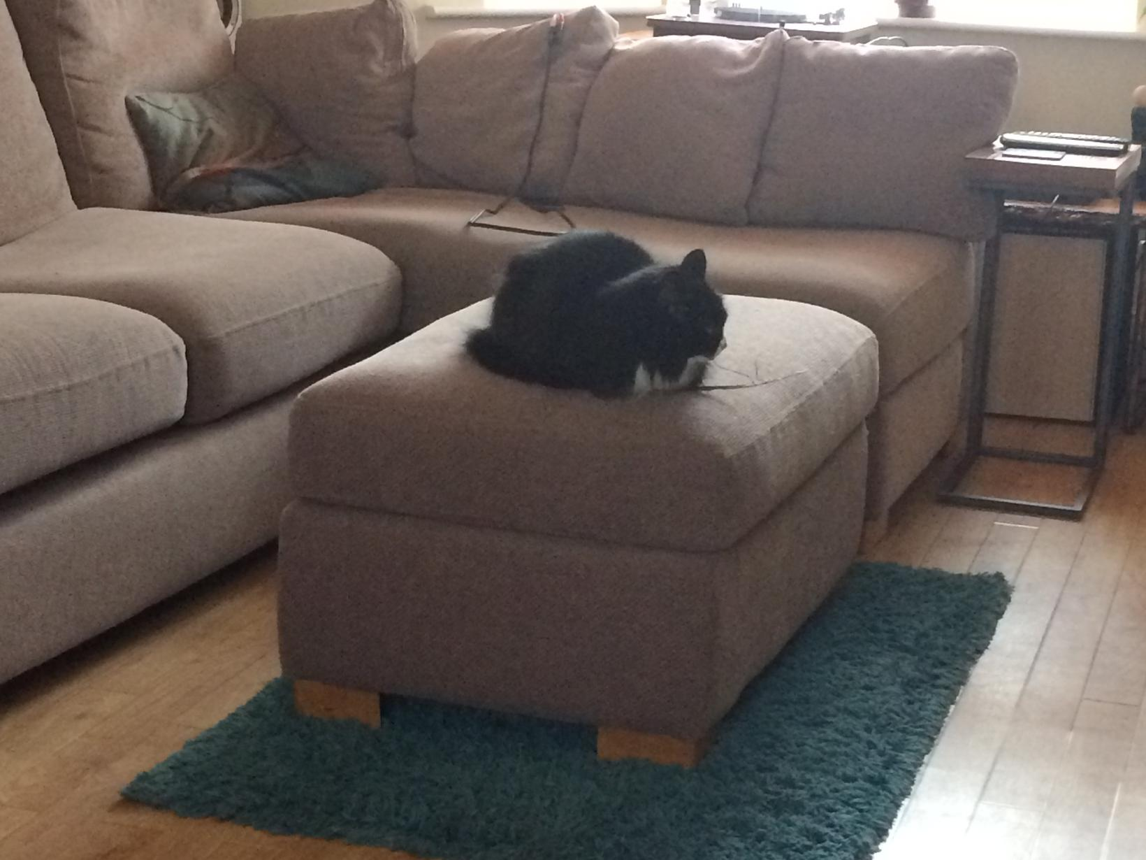Housesitting assignment in Hitchin, United Kingdom
