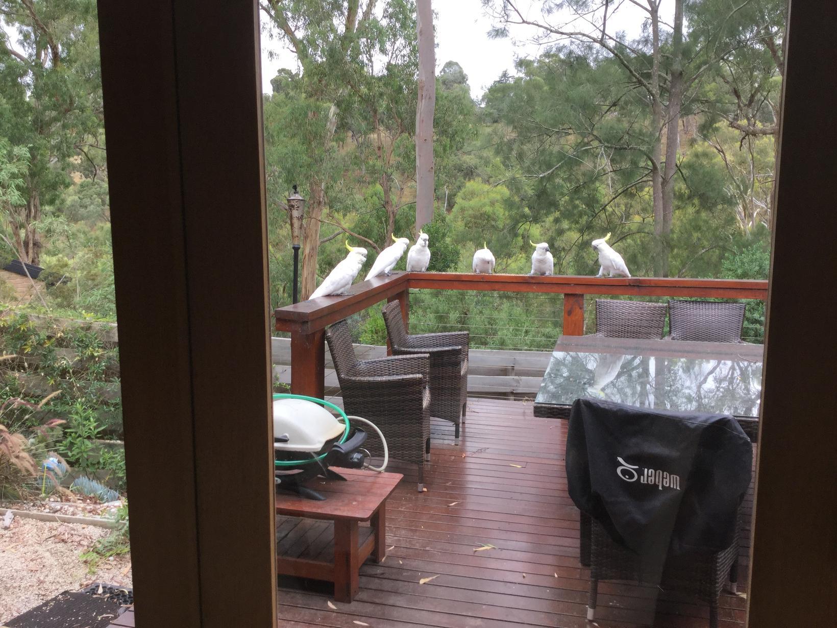 Housesitting assignment in Greensborough, Victoria, Australia