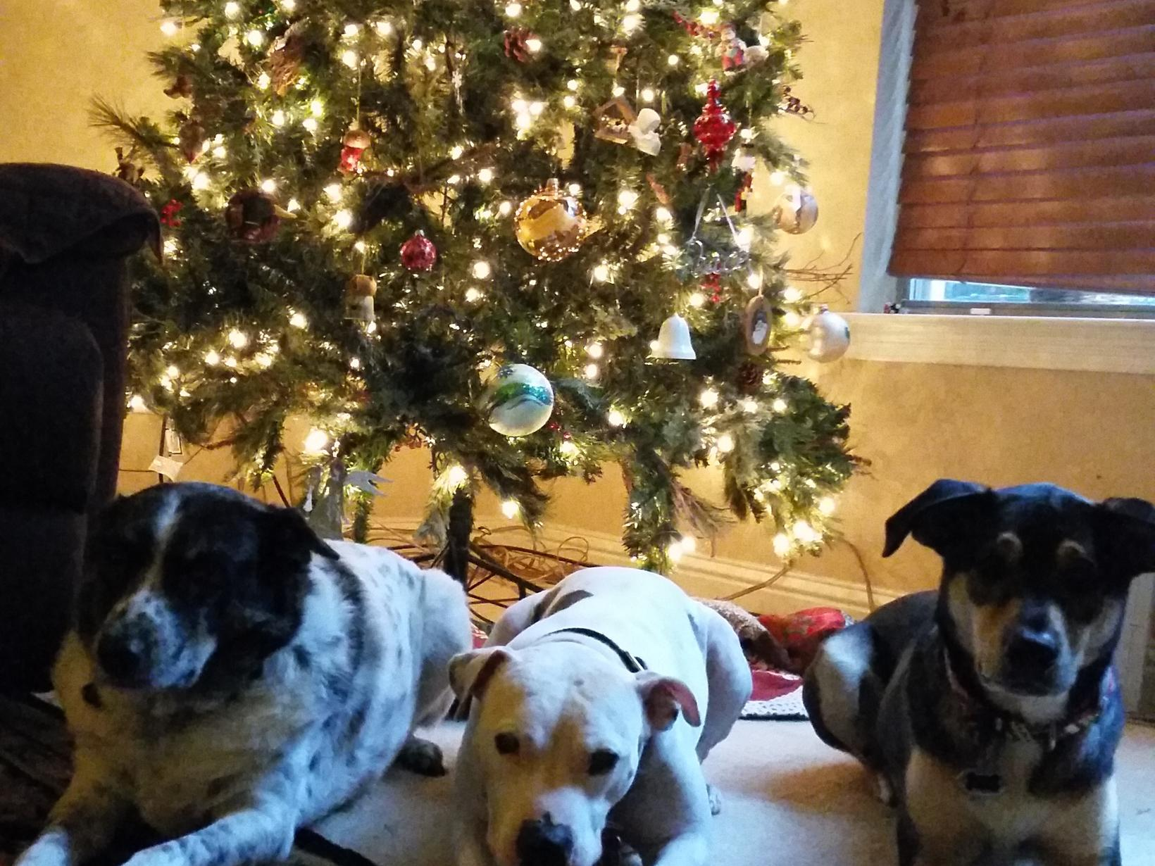 Housesitting assignment in Round Rock, Texas, United States