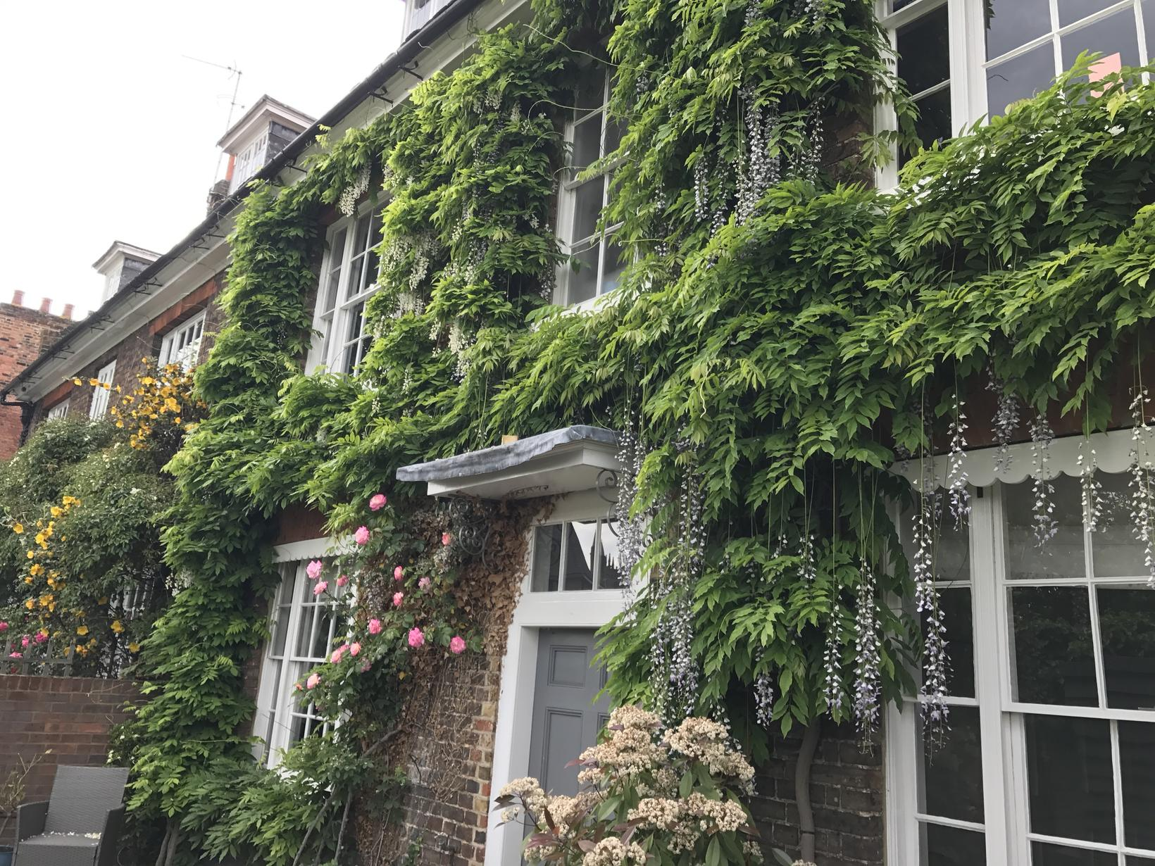 Housesitting assignment in Hertford, United Kingdom