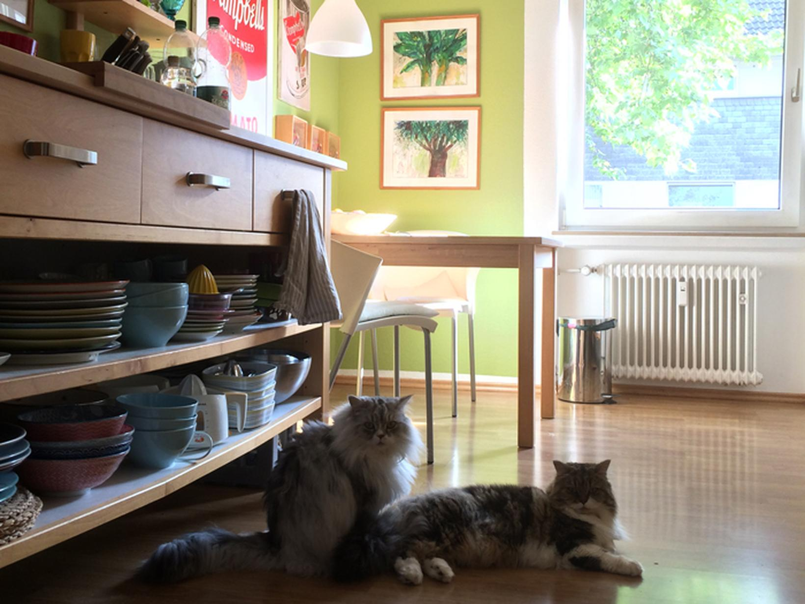Housesitting assignment in Essen, Germany