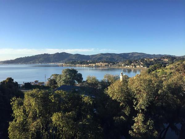 Pet sitter needed for Tiburon apartment - breathtaking views, easy commute to SF!