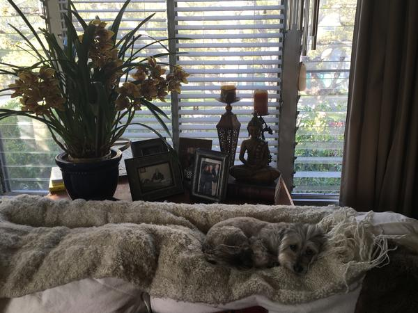 Housesitting assignment in Beverly Hills, California, United States