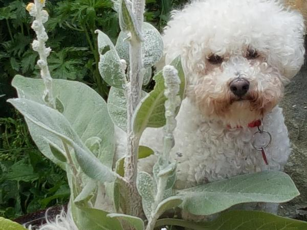 Snowball needs a housesitter for her and her comfortable home in a lovely area.