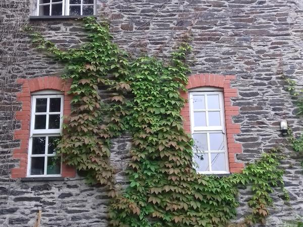 Housesitting assignment in Machynlleth, United Kingdom