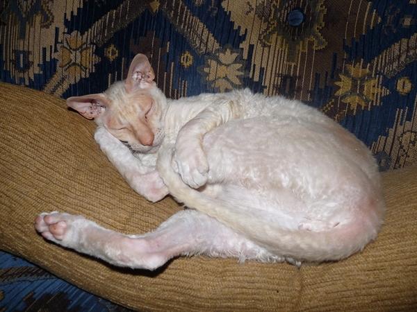 House/cat sitter. Mandurah - 1hr south of Perth, Australia.
