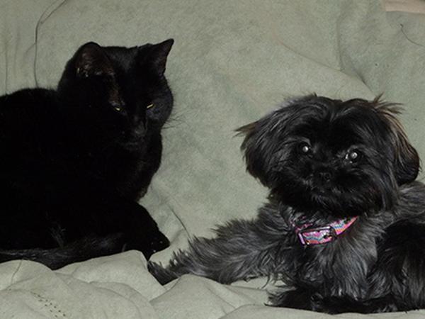 House Sitter/Pet Sitter Needed for Winter