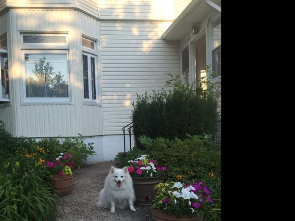 House & Pet Sitter Needed in New Rochelle, NY August 16 - Sept 24th