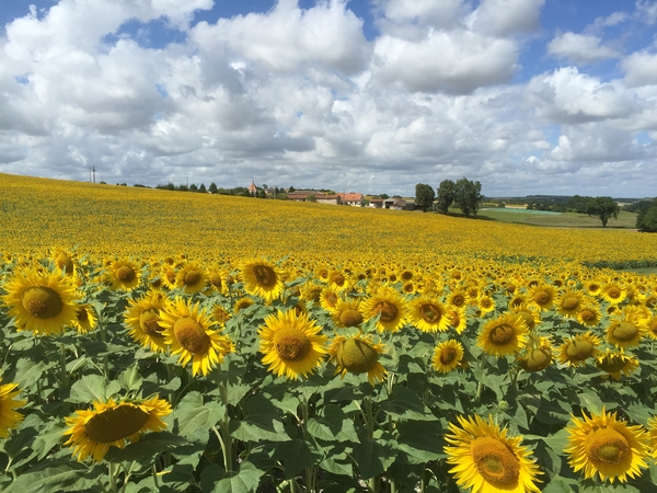 Sitting required for 3 dogs in the beautiful Charente