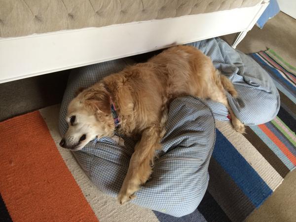 Animal loving housesitter who loves the beach!