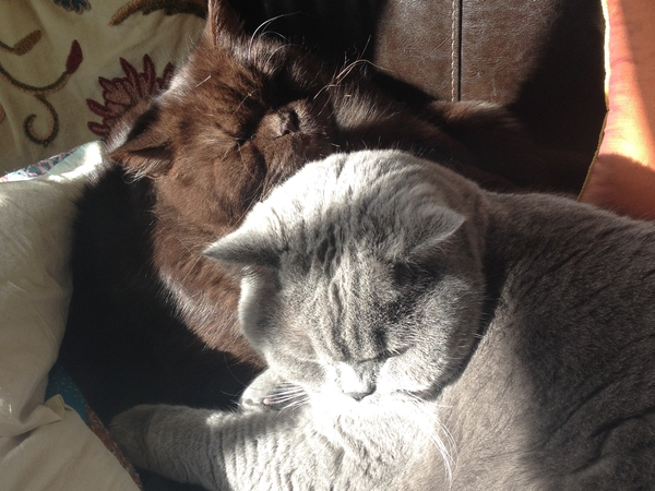Harleston, Norfolk | house & catsitter needed September - November